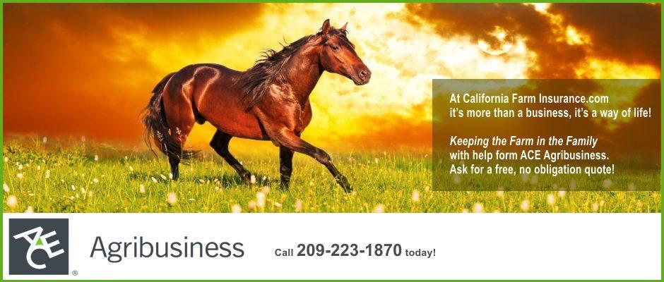 ACE-v2-940x400-horse